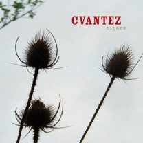 my-cvantez-tigers