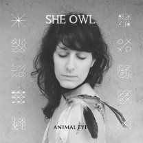 She Owl Animal Eye