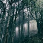 Akira Kosemura In The Dark Woods