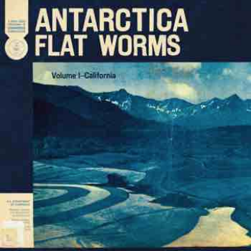FLAT WORMS ANTARCTICA