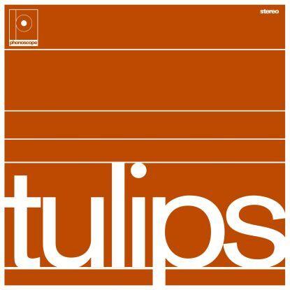 Maston Tulips